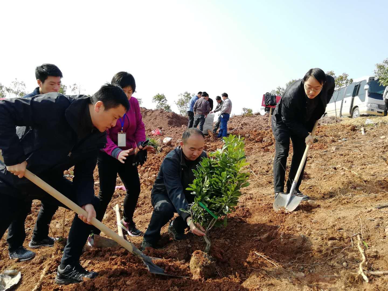 团市委参加2019年义务植树活动